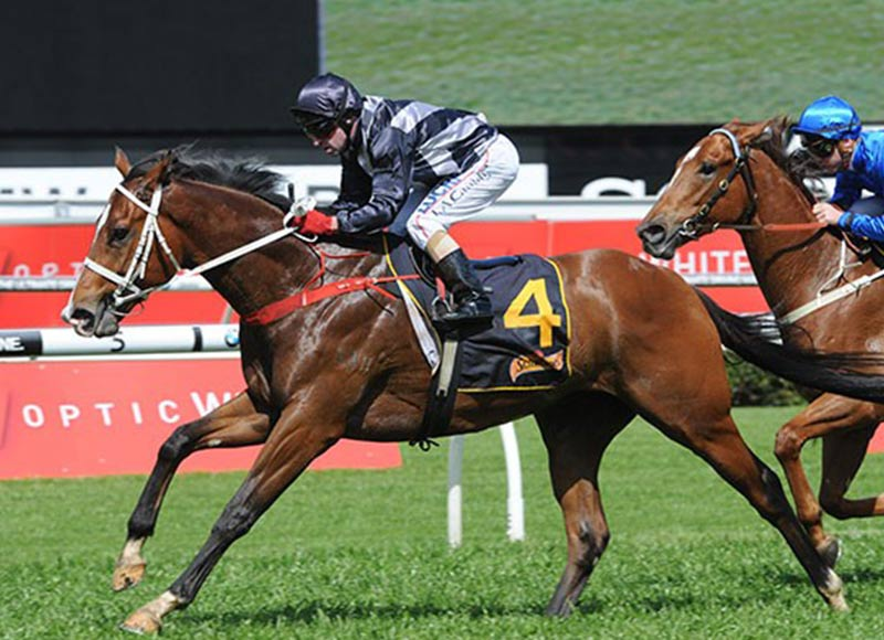 Snippets & Redoute's Choice Stallion Counterattack Heads To Kitchwin