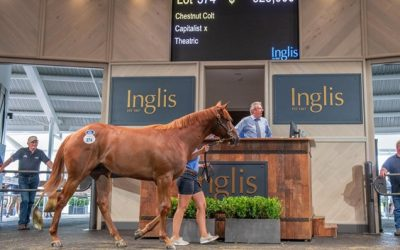 For breeders – does money where the mouth is matter?